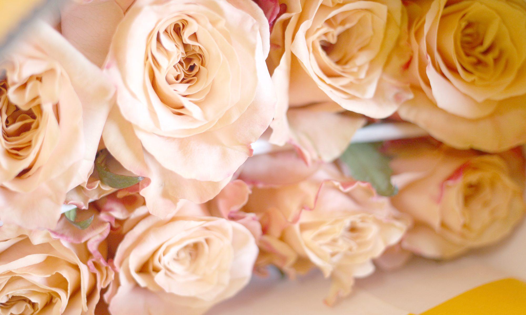 Premium Flowers New Zealand